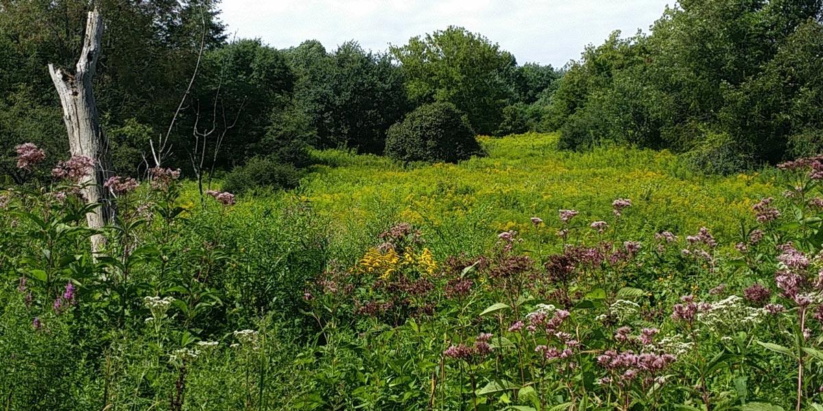 Fairchild Hill & Burlingame Area Trails – Cazenovia Preservation