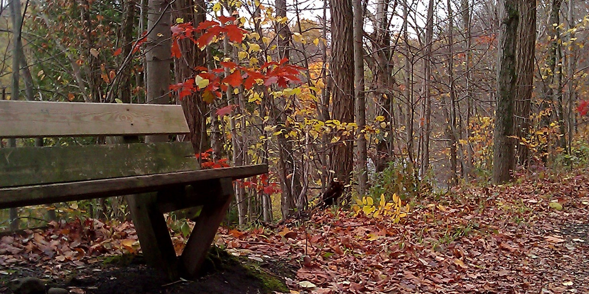 Gorge-Trail-Bench