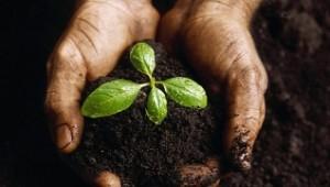 small_soil